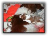 still litter 8-26-2014 (1)