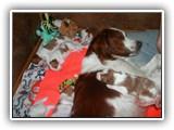 still litter 8-26-2014 (5)
