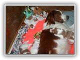 still litter 8-26-2014 (6)